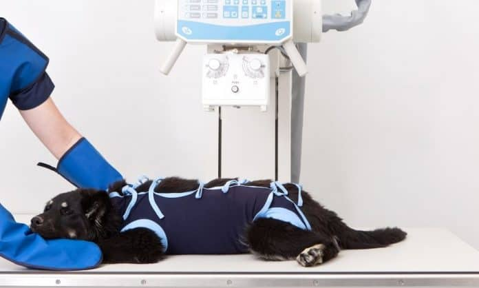 Why Would Pets Need Anesthesia for X-Rays?